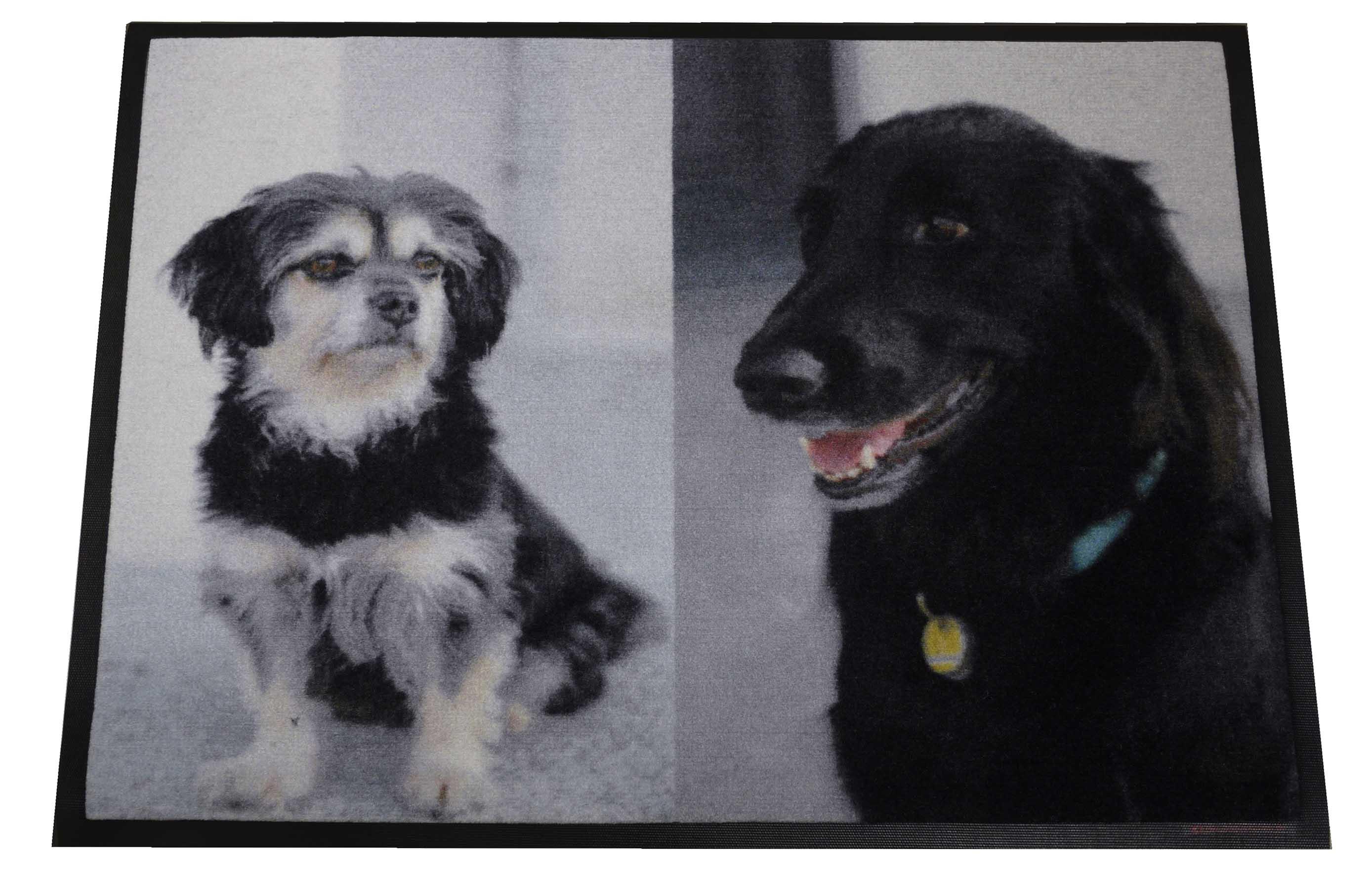 Foto-Dreckstückchen wash&go mit Hunden.