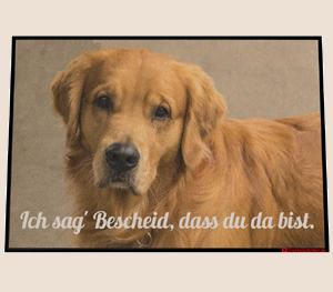 Dreckstückchen: Fotomatte Hund Startseite